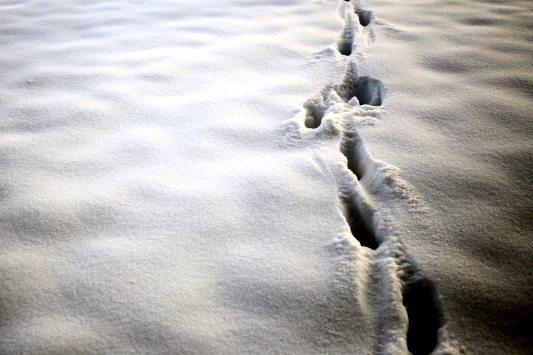 Walking-on-Snow-4x6